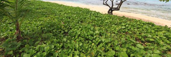 タチョンガビーチ