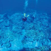 ロタブルーの海の中には神秘的な青の世界が広がる