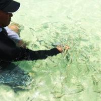 シータッチのプールには小魚が入り込むこともある