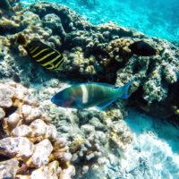 白砂の海底もクリアに見える。世界有数の透明度を誇る北マリアナ諸島ならではの光景です。