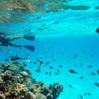 生きたサンゴ、カラフルな熱帯魚。誰もが思いえがく『南国の海』があるマリアナ。