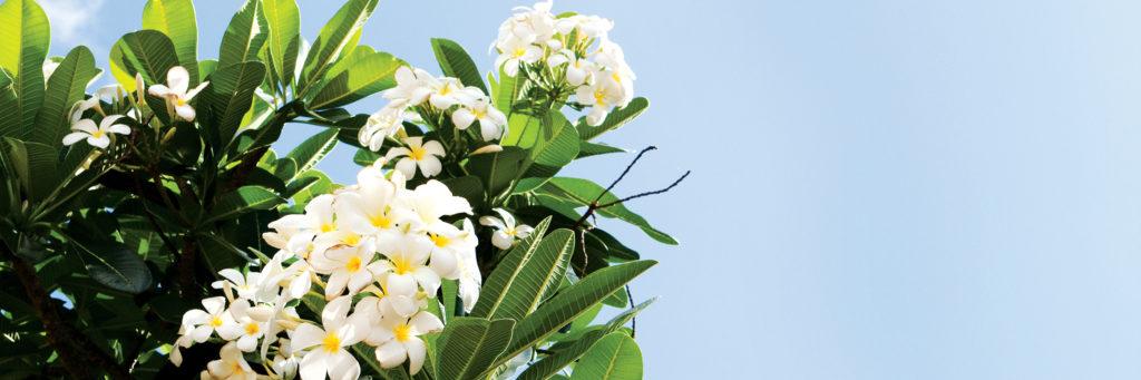 サイパン、テニアン、ロタ。北マリアナ諸島の祝日・休日